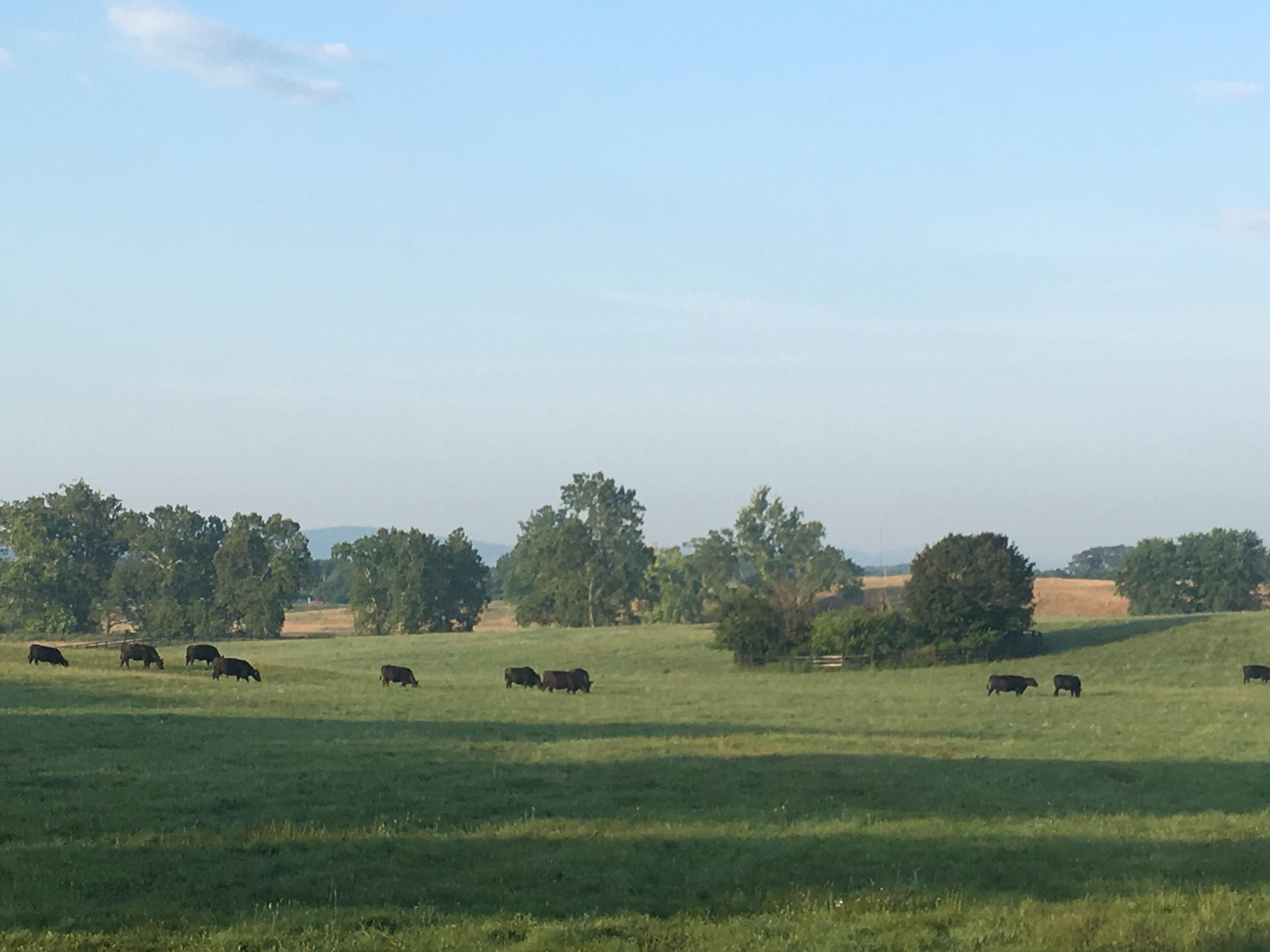 audley-pasture