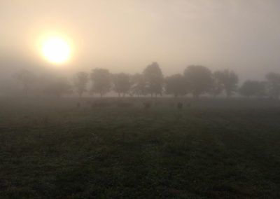 foggy pasture picture